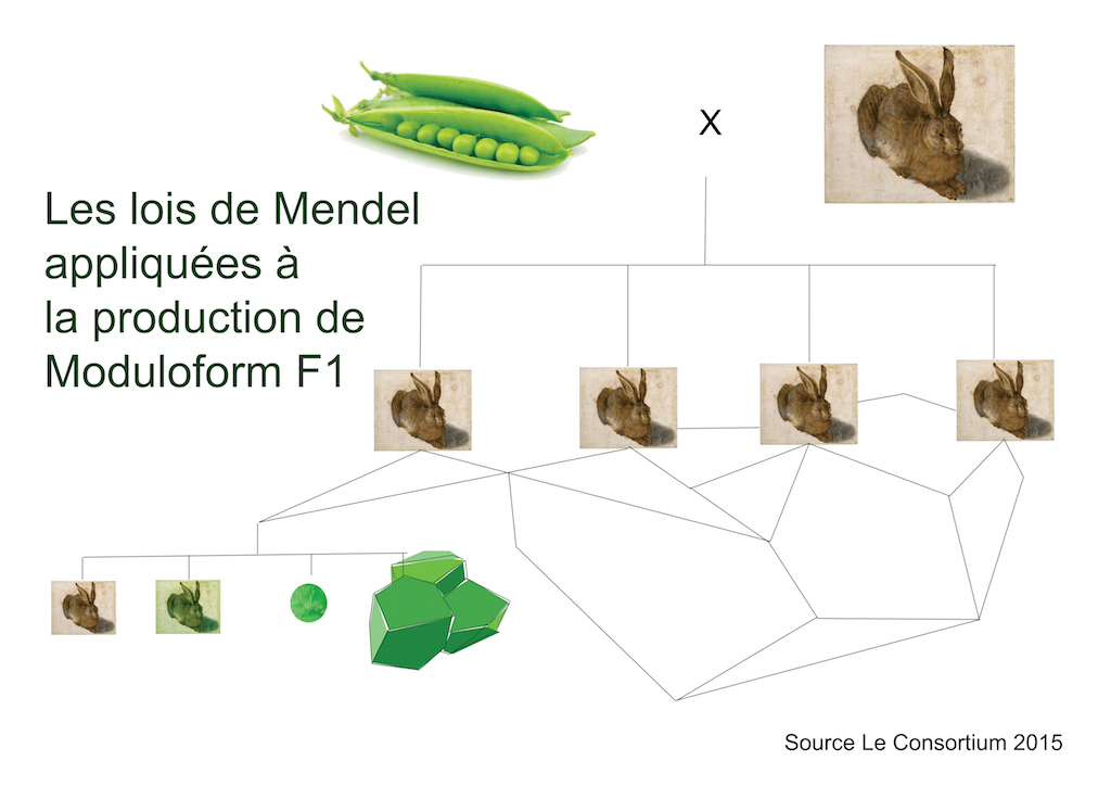Lois de Mendel appliquées à la production de Moduloform F1